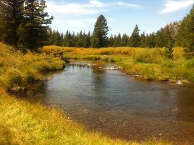 Caples Creek 08192014 1208-small