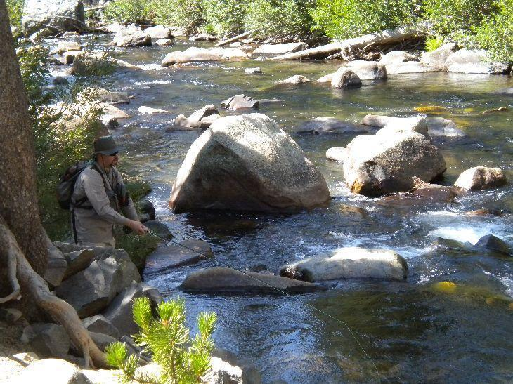 Northern california fly fishing forum for Fly fishing forum
