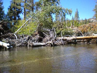Middle fork San Joaquin River Downed Trees