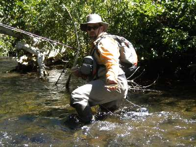 Middle fork San Joaquin River Brown Trout